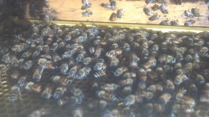 Devotional on making honey and honeybees sweetness